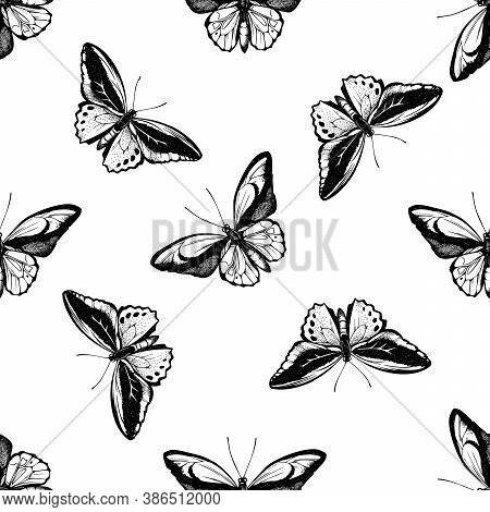 Seamless Pattern With Black And White Common Green Birdwing, Wallace S Golden Birdwing Stock Illustr