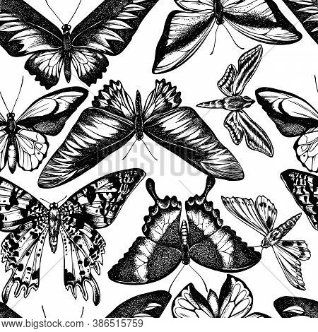 Seamless Pattern With Black And White Wallace S Golden Birdwing, Ambulyx Moth, White-banded Hunter H