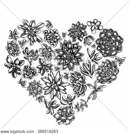 Heart Floral Design With Black And White Succulent Echeveria, Succulent Echeveria, Succulent Stock I