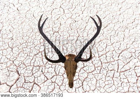 Beautiful Antler With Skull Isolated On Cracked Ground With Clipping Paths For Graphic Design. Proud