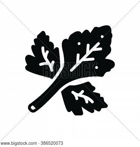 Black Solid Icon For Coriander Herb Leaf Fresh Food Foliage Flavour Natural Seasoning Vegetable Agri