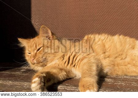 Red Fluffy Cat Lying On A Bench. Close Up