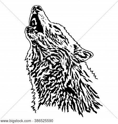 The Wolf Has Raised Its Head And Is Howling At The Moon. Vector Illustration Isolated On A White Bac