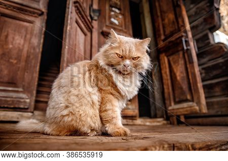 Angry Homeless Fluffy Cat Sits Near Wooden House. Concept Of Dissatisfaction With Work, Life Is Mond