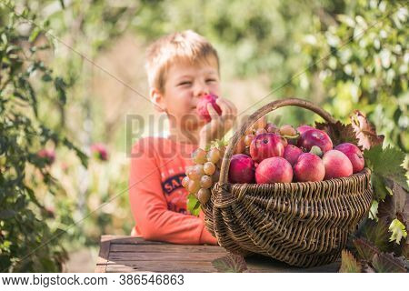 Cute Boy With Basket Full Of Ripe Apples In A Garden. Apple Harvest. Autumn Concept. Fresh Apples. A