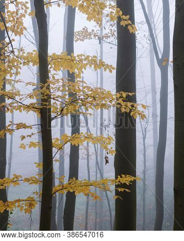 Mysterious dark beech forest in fog. Autumn morning in the misty woods. Magical foggy atmosphere. Landscape photography