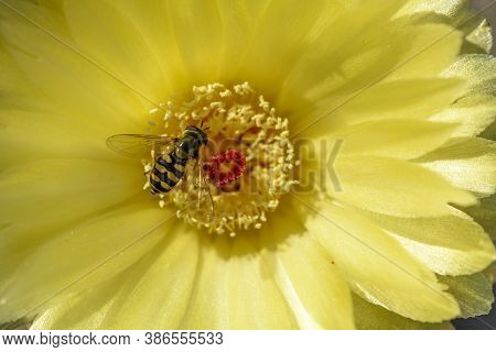 Insect On A Yelow Flower In A Garden