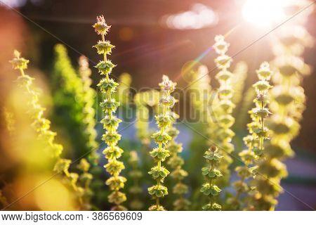 Green plants  in summer garden