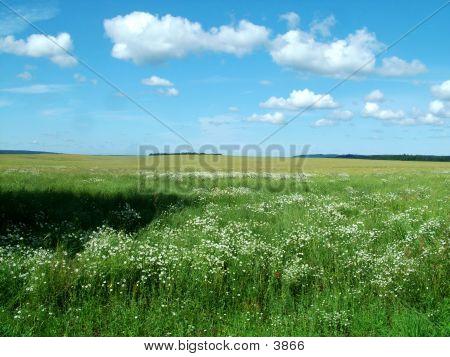 Polish Landscape