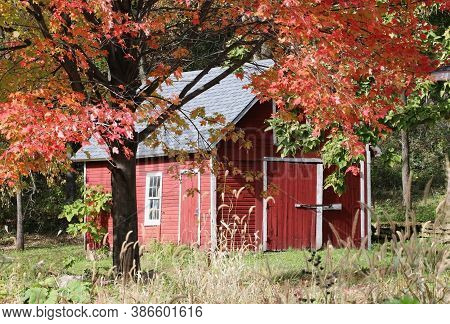 Colors Of Autumn. Scenic View With Classic Wisconsin Red Barn Between Maple Trees Brunches With Brig