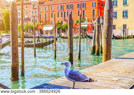 Seagull On Wooden Pier With Poles Of Grand Canal Waterway In Venice Historical City Centre With Gond