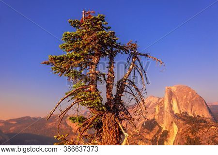 Sunset Close Up With Tree At Glacier Point Lookout In Yosemite National Park, California, United Sta