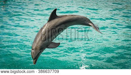Beautiful Dolphin Bottle Noise Jumping Higk In The Air In Isla Mujeres, Mexico
