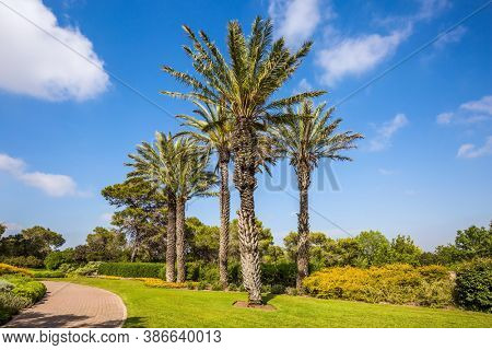 Israel. Great walk in a clean well-kept park. Large green grassy meadow. The magnificent park on the slopes of Mount Carmel. Warm sunny day. Stone paved scenic walkway