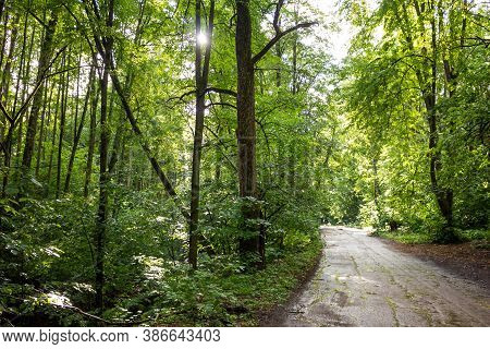 The Road Through The Forest And Green Thickets