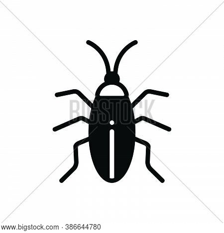 Black Solid Icon For Cockroach Blattodea Bug Creepy Croton-bug Disease Dirty Harm Prejudicial Insect