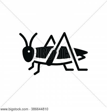 Black Solid Icon For Grasshopper Bizarre Locust Critter Plague Brukebruke Bug Dirty Prejudicial Inse