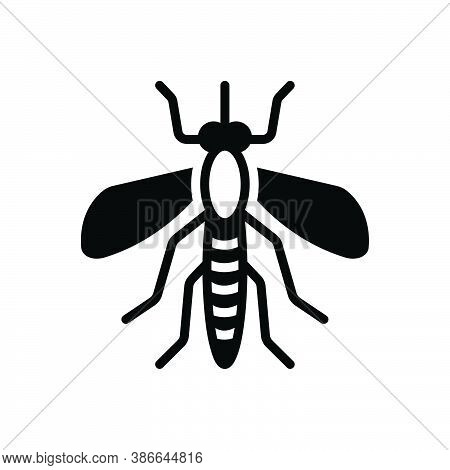 Black Solid Icon For Mosquito Bloodsucking Bite Disease Gnat Bug Dirty Dangerous Epidemic Prejudicia