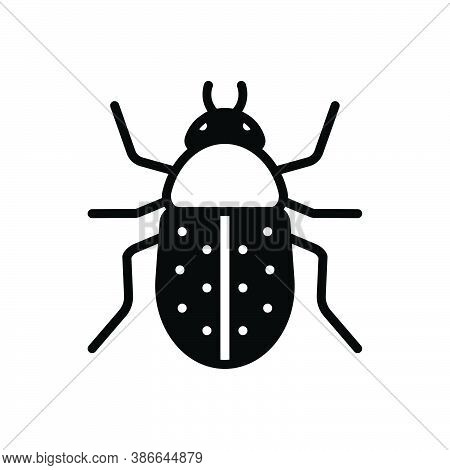 Black Solid Icon For Beetle  Bug Fly Prejudicial Insect Grasshopper Cricket Colorado Harmful Bumbleb