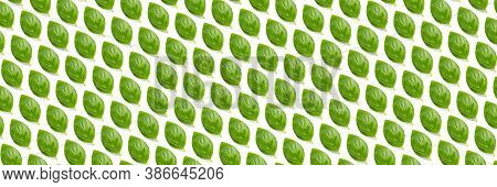 Basil Banner. Green Leaves Of Fresh Italian Basil Background On Whte Backdrop. Basil Leaves Isolated