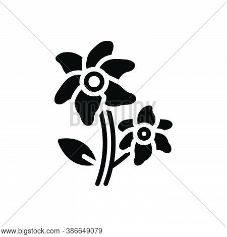 Black Solid Icon For Lily-flowers Lily Florist Natural Flower Blossom Botanical