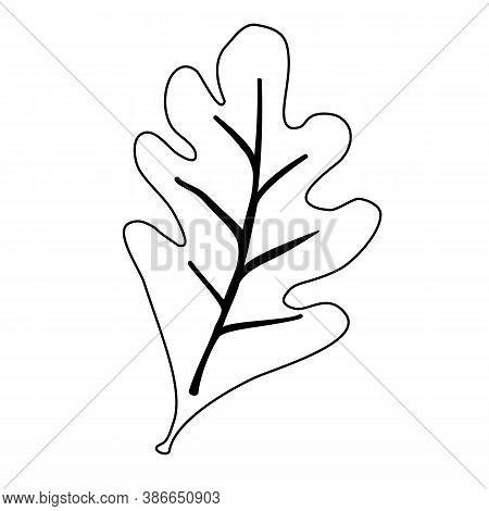 Line Oak Leaves Outline, Silhouettes On White Background. Sketch Illustration With Oak Lives. Outlin