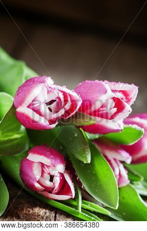 Pink Spring Tulips On An Old Wooden Background, Selective Focus, Shallow Depth Of Field