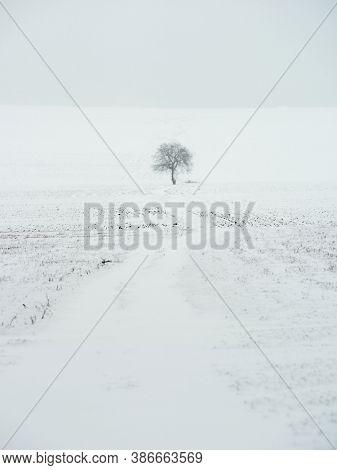 beautiful winter landscape on harsh weather, Dobrogea, Romania