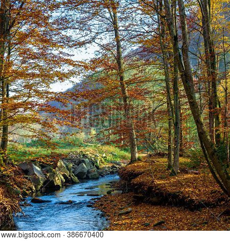 Mountain Water Stream In The Beech Forest. Beautiful Nature Scenery In Autumn On A Sunny Day