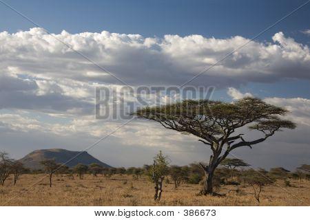 Africa Landscape  Serengeti
