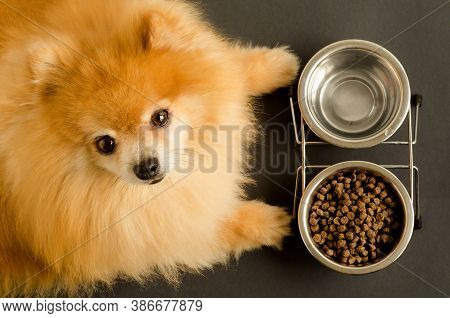 Dog Is Eating Dry Food And Water In Bowl, Looks At The Camera, Waiting For The Command. Animal And D