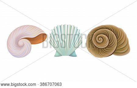 Sea Habitants With Barnacle And Spiral Conch Vector Set