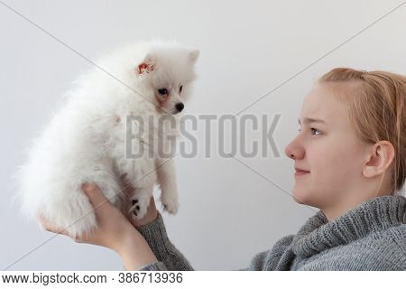 A Girl With Blonde Hair In A Gray Sweater, Holding A White, Fluffy Pomeranian Puppy, Raised The Pupp