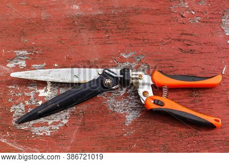Red Pruning Shears, Garden Secateurs Or Hand Pruners Are Garden Tools Used In Gardening For Cutting