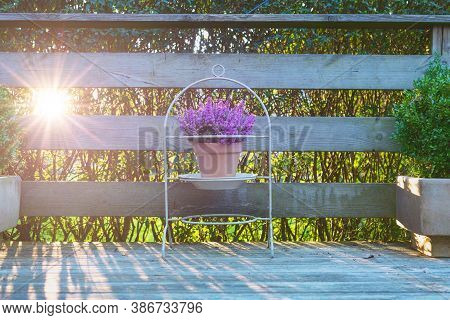 Violet Heather In A Clay Pot On A Wooden Terrace. Purple Flowers In A Beautiful Stand Outside On Woo
