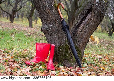 Red Rubber Boots And A Black Umbrella In The Autumn Park.