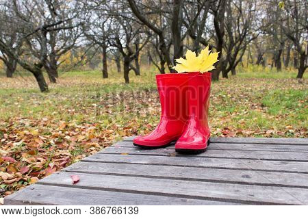 Red Rubber Boots Against The Backdrop Of An Autumn Park. Bright Yellow Leaves, Concept