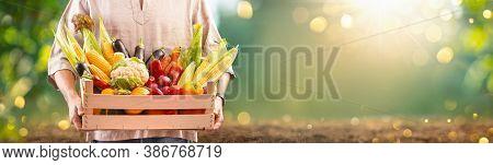 Farmer Man Holding Wooden Box Full of Fresh Vegetables. Harvest