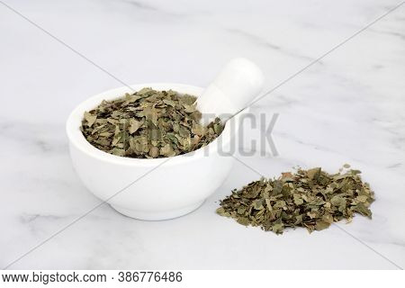 Dried birch leaves in a mortar with pestle. Used in herbal medicine for weight loss, lowers cholesterol, strengthens the immune system, aids digestion, is a diuretic & anti inflammatory. Betula alba.