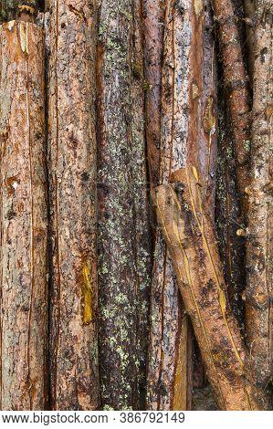 Baumstaemme Auf Einem Stapel In Der Draufsicht Als Hochformat