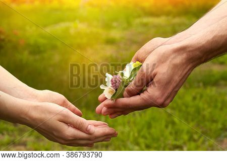 A Man Gives Flowers To A Woman. Flowers In Men's Hands. Hand Gives Flowers With Love. Romance. Flora