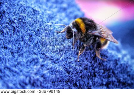 Large Bumble Bee On The Blue Textile Fragment