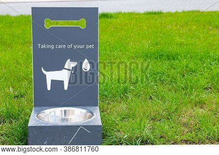 Portable Pet Water Drinker For Dogs And Cats On Green Grass. Pet Water Dispenser. Accessories For Pe