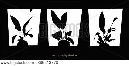 Silhouette Of The Flower Pot Shadow On The Window. Vector Background. Black Flat Template For Overla