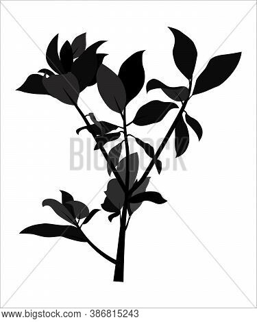 The Black Shadows From Branches And Leaves. Flat Contour Of A Tropical Bush To Overlap The Design An
