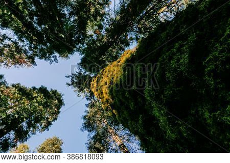 Southwest Usa, Sequoia And Kings Canyon National Park California