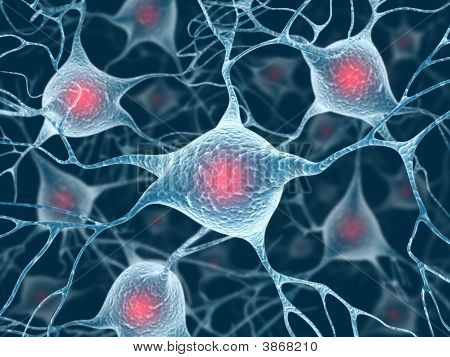 Neurons And Nucleus