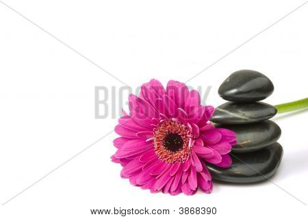 Balancing Pebbles And Daisy Flower