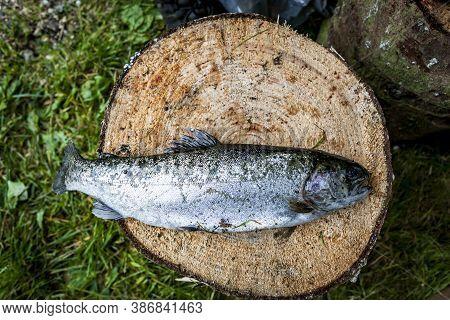 Closeup Of A Dead Fish On A Stub