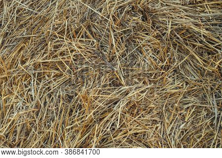 Dried Haystack Background. Dry Yellow Golden Colors Straw Texture. Forage For Livestock. Abstract Na
